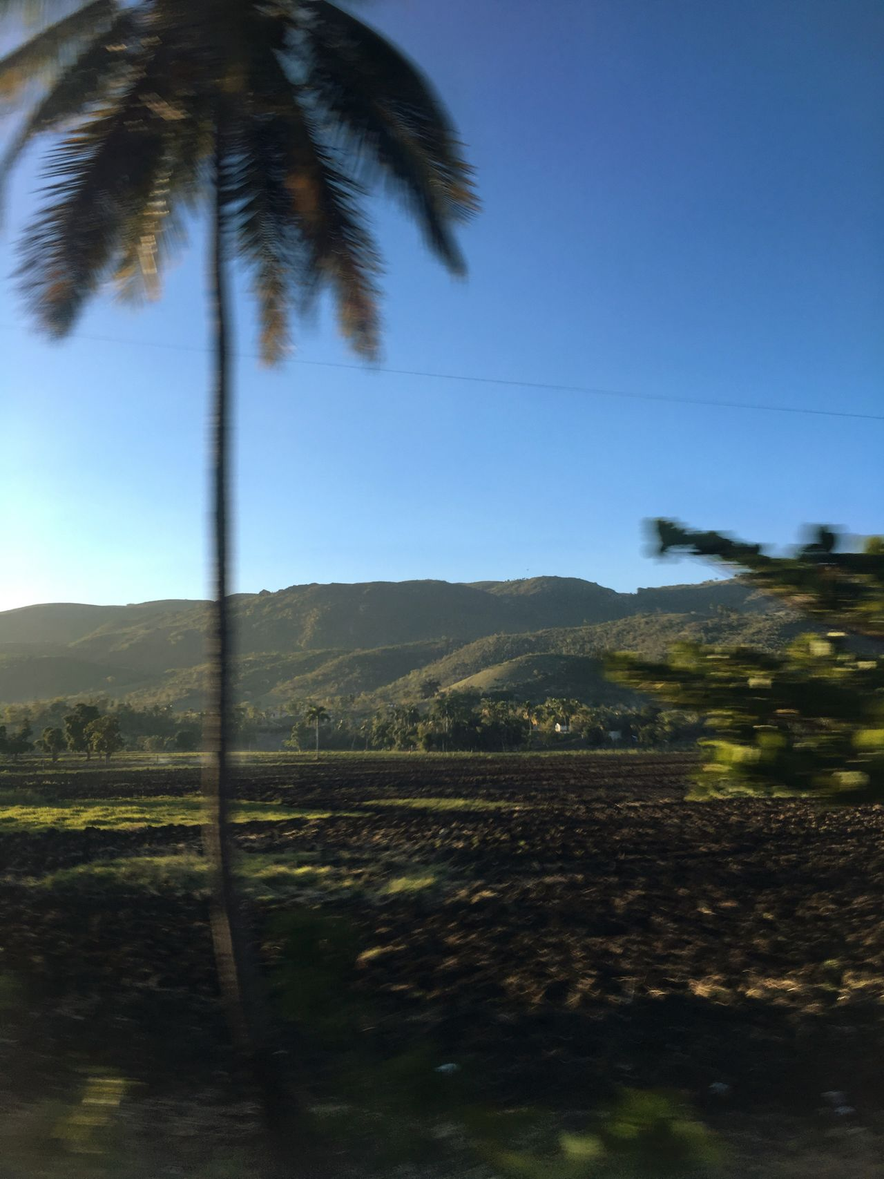 Palm Tree Tranquil Scene Tranquility Scenics Solitude Clear Sky Landscape Beauty In Nature Growth Nature Mountain Tree Trunk No People Countryside Mountain Range Outdoors Motion Motion Blur Haiti