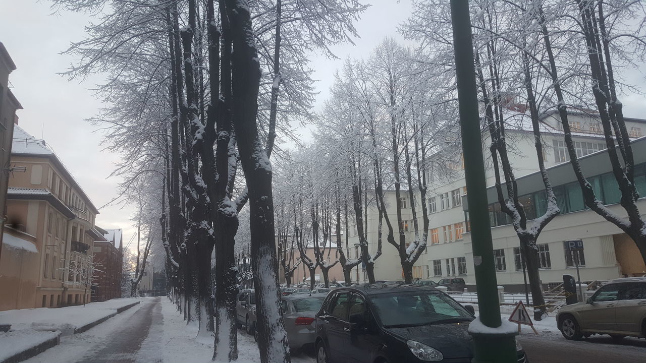 Tree Travel Sky City Snow Cold Temperature Winter Outdoors Cars Klaipeda Day