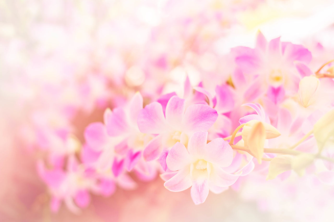 flower, nature, beauty in nature, petal, freshness, pink color, fragility, close-up, no people, backgrounds, growth, flower head, outdoors, day