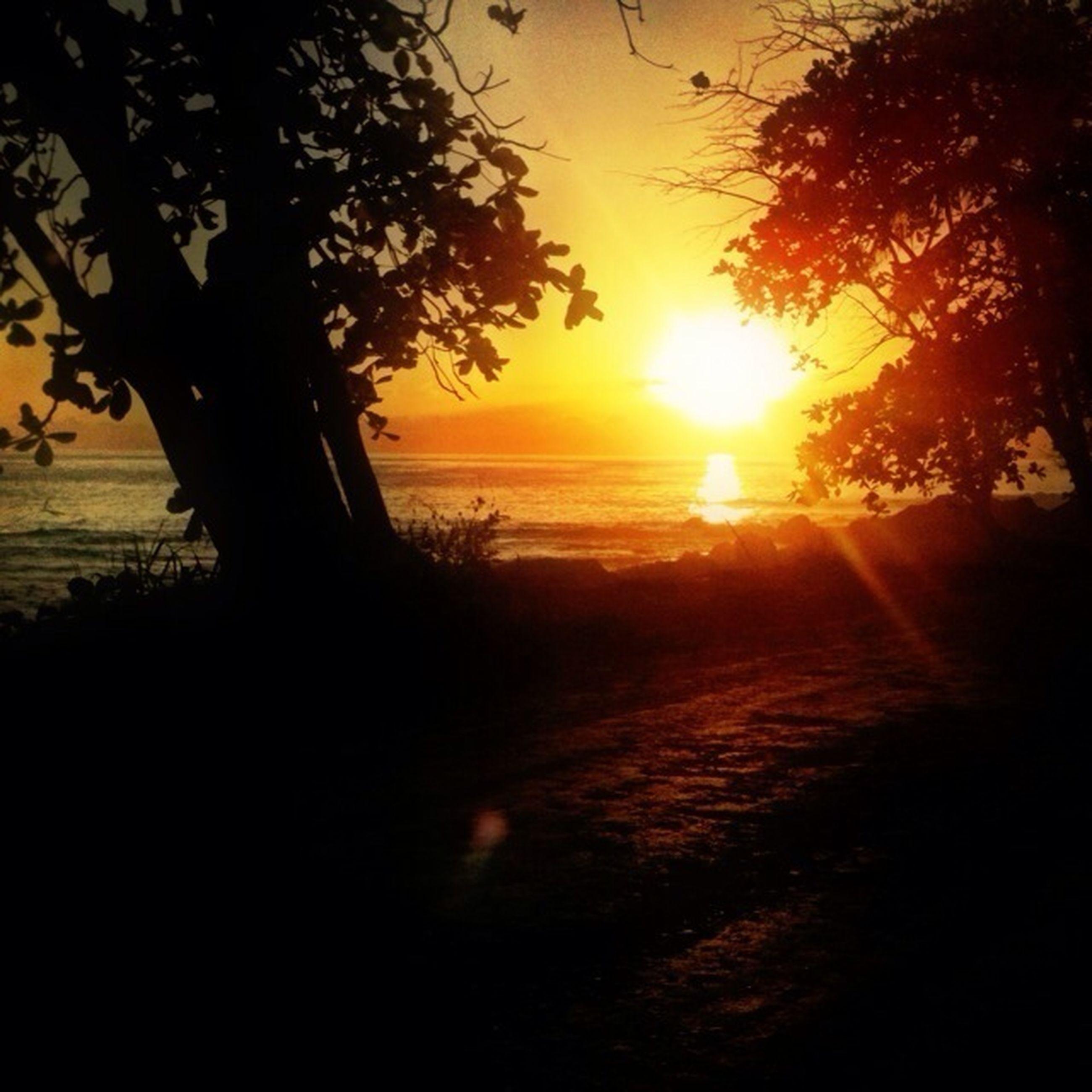 sunset, silhouette, tranquil scene, tranquility, sun, scenics, tree, beauty in nature, orange color, sky, nature, water, sea, idyllic, horizon over water, sunlight, branch, non-urban scene, tree trunk, beach