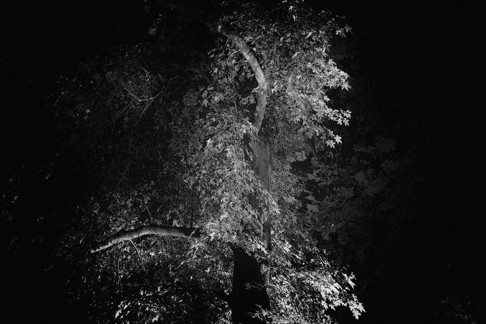 Dancing leaves Abstract Black And White Black Background Close-up Horizontal Leaves Monochrome Photography Motion Night No People Outdoors Sky Tree