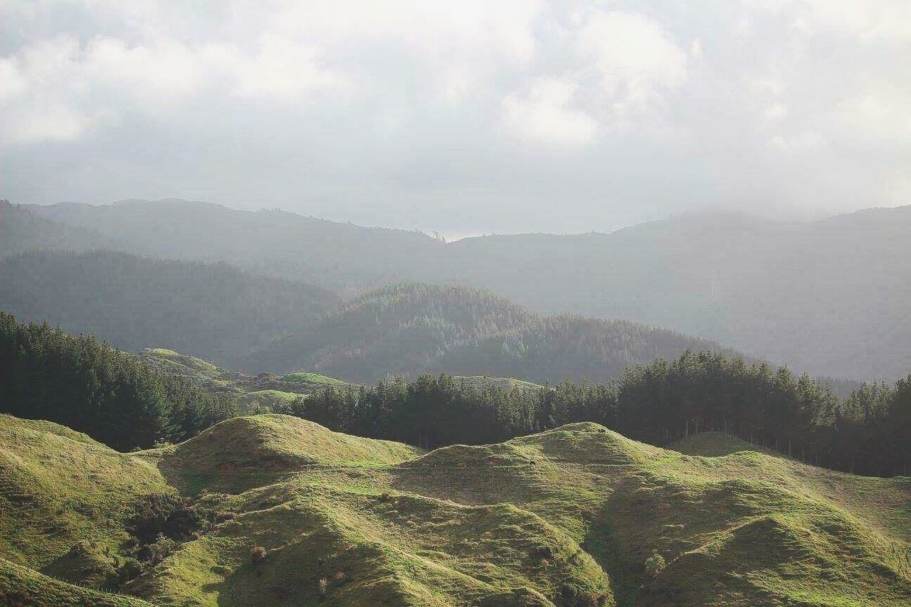 The Tararua Ranges. Travel Nature Plant Mountain Landscape Social Issues Environmental Conservation Beauty In Nature Tree Outdoors Scenics Forest No People Lush - Description Natural Phenomenon Agriculture Tea Crop Winding Road Day Beauty Life Newzealand Journey Success Learn
