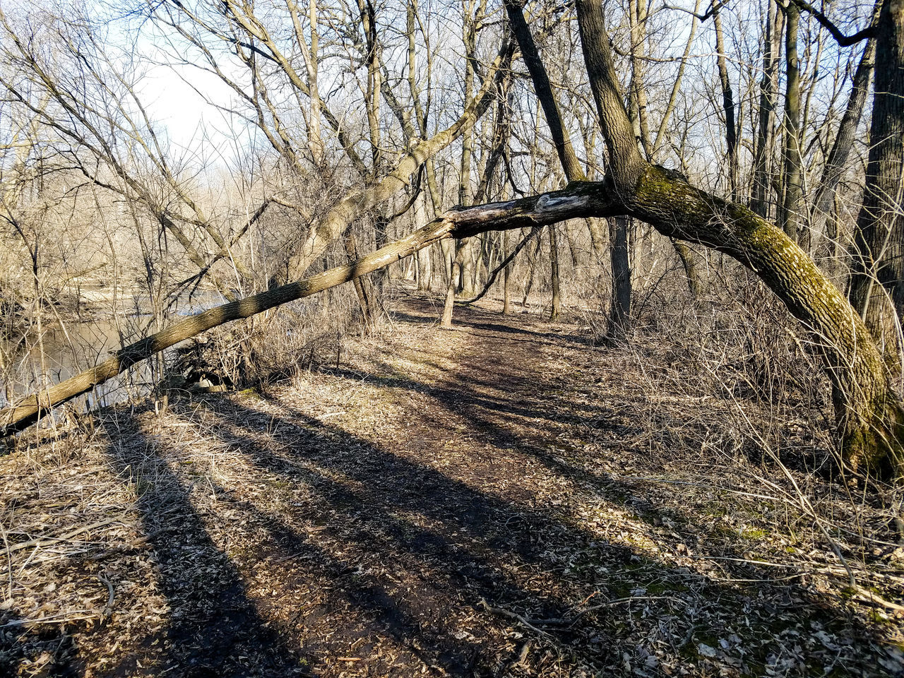 Tree Nature No People Outdoors Sky Day Landscape Bare Trees Explore Trees Minnesota Paynesville Nature Park  Fallen Tree Spring Springtime March Branch Beauty In Nature Forest Sunlight Crow River Nature Park Walking Trail
