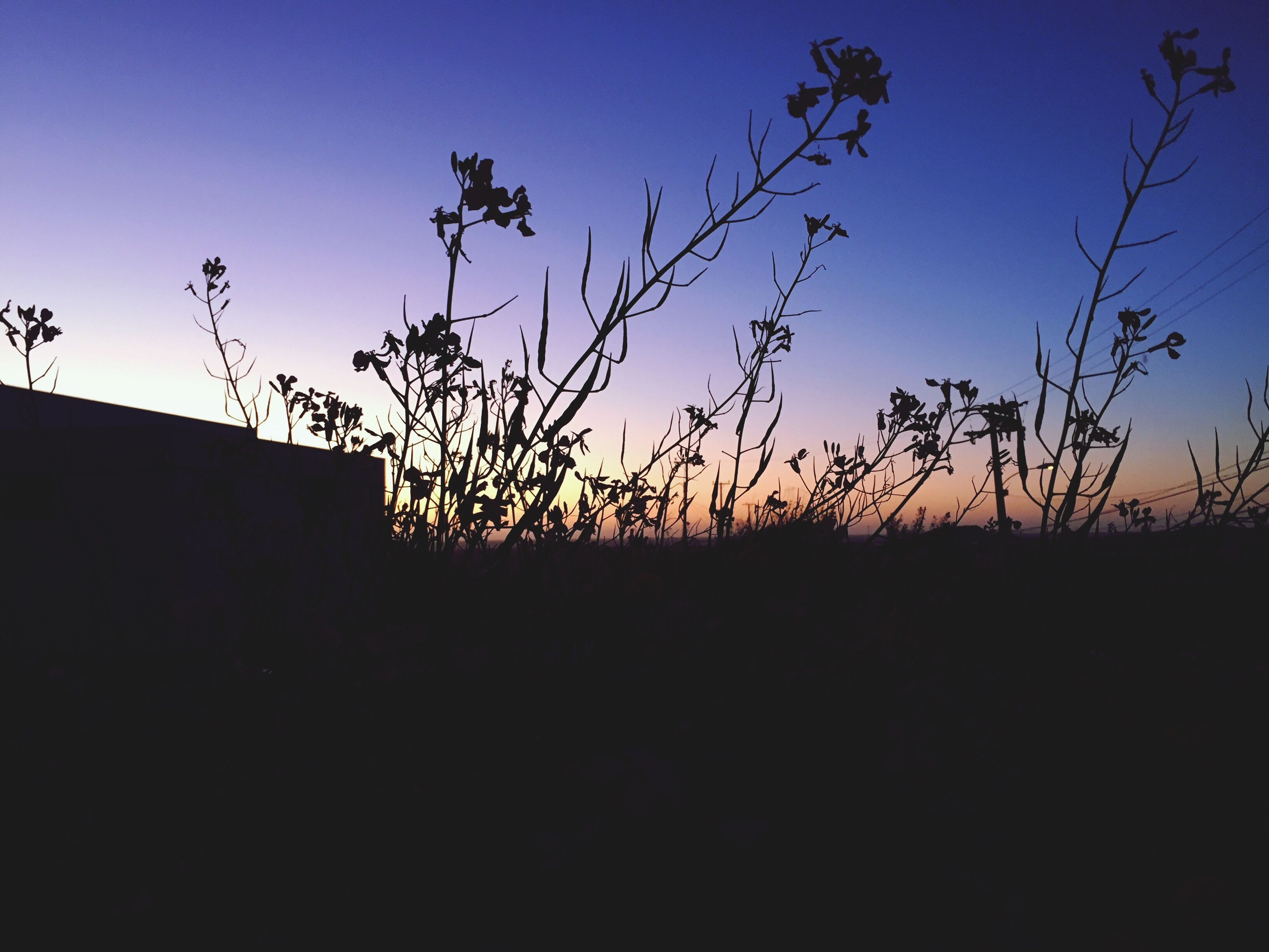 silhouette, sunset, clear sky, copy space, blue, nature, tree, sky, building exterior, beauty in nature, orange color, built structure, tranquility, low angle view, outdoors, house, no people, plant, dusk, field