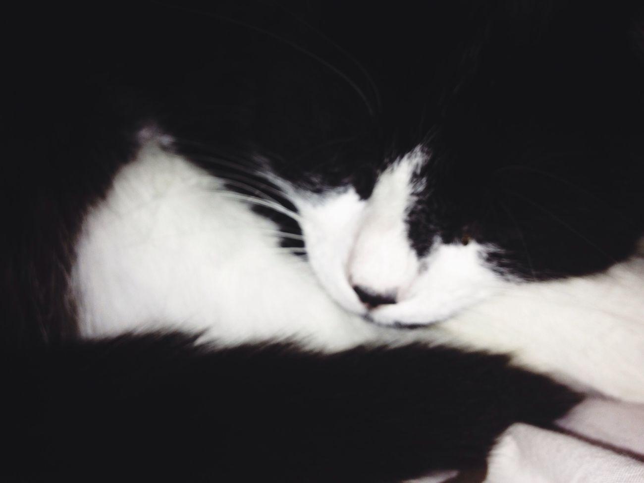 Cats blackandwhite