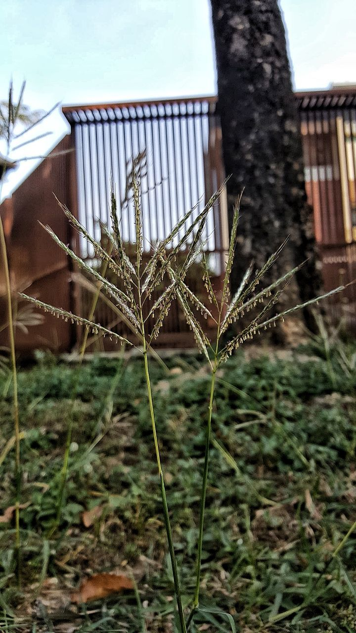 growth, no people, outdoors, day, nature, architecture, close-up, plant, sky, grass