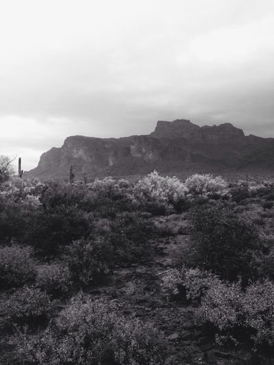Nature Desert Beauty Apache Junction Rain #storm