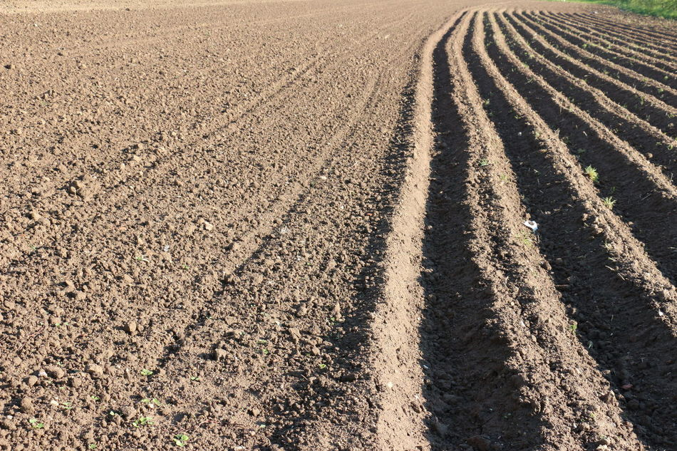 plowed field Agriculture Day Field Growth Nature No People Outdoors Plowed Plowed Field Plowed Land Rural Scene
