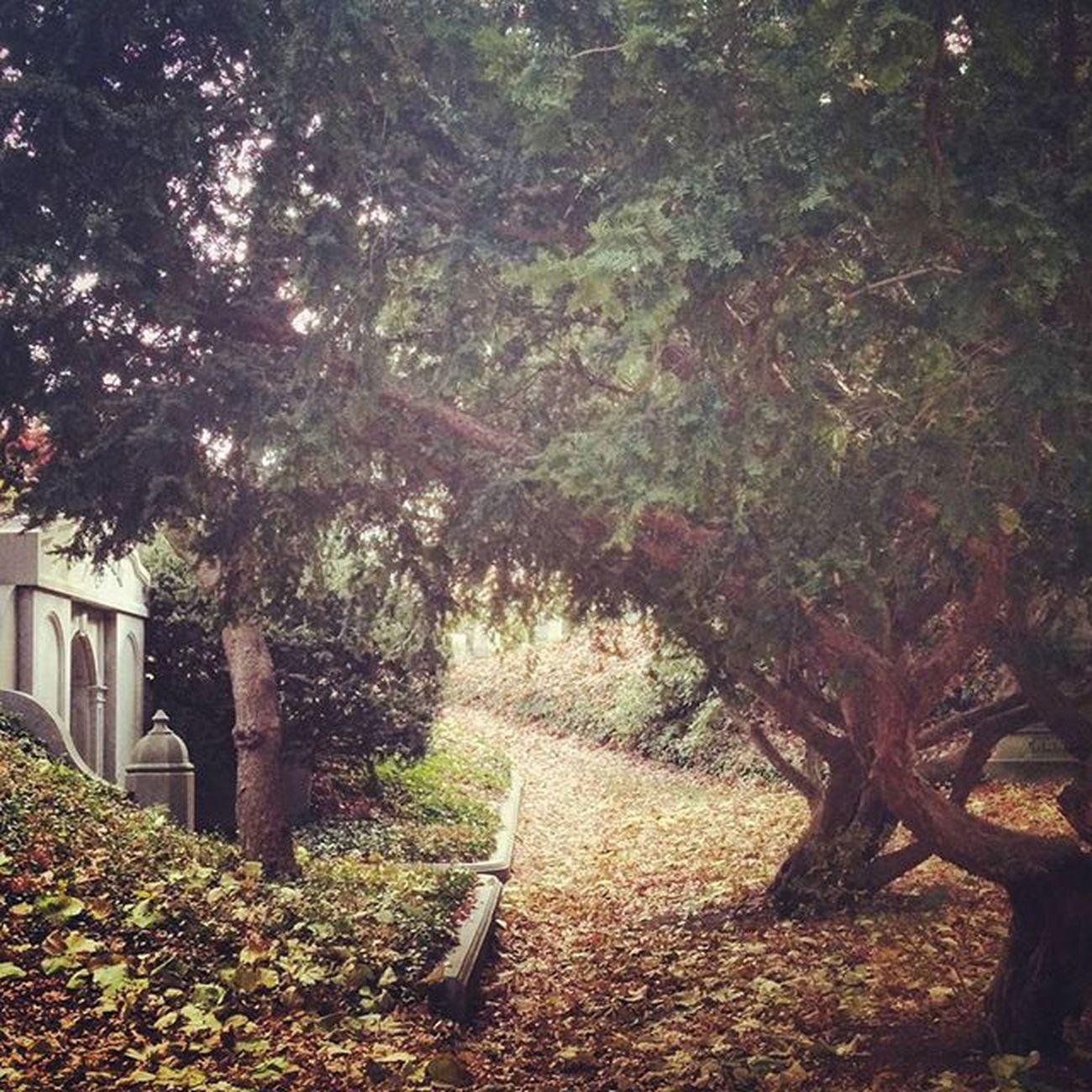 Mountauburncemetery Cemetery Ohsoquiet Autumn