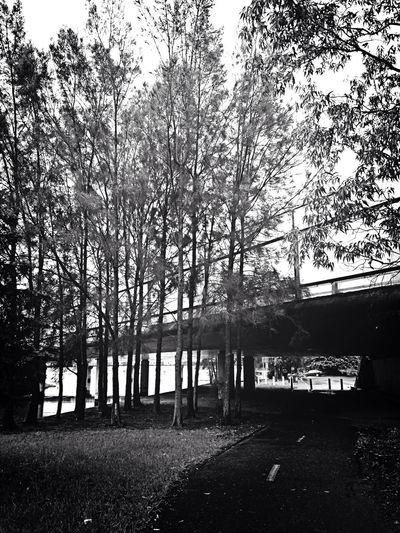 A bridge to far. Taking Photos Walking Around Trees Bridge Water Blackandwhite Photography Street Streetphotography