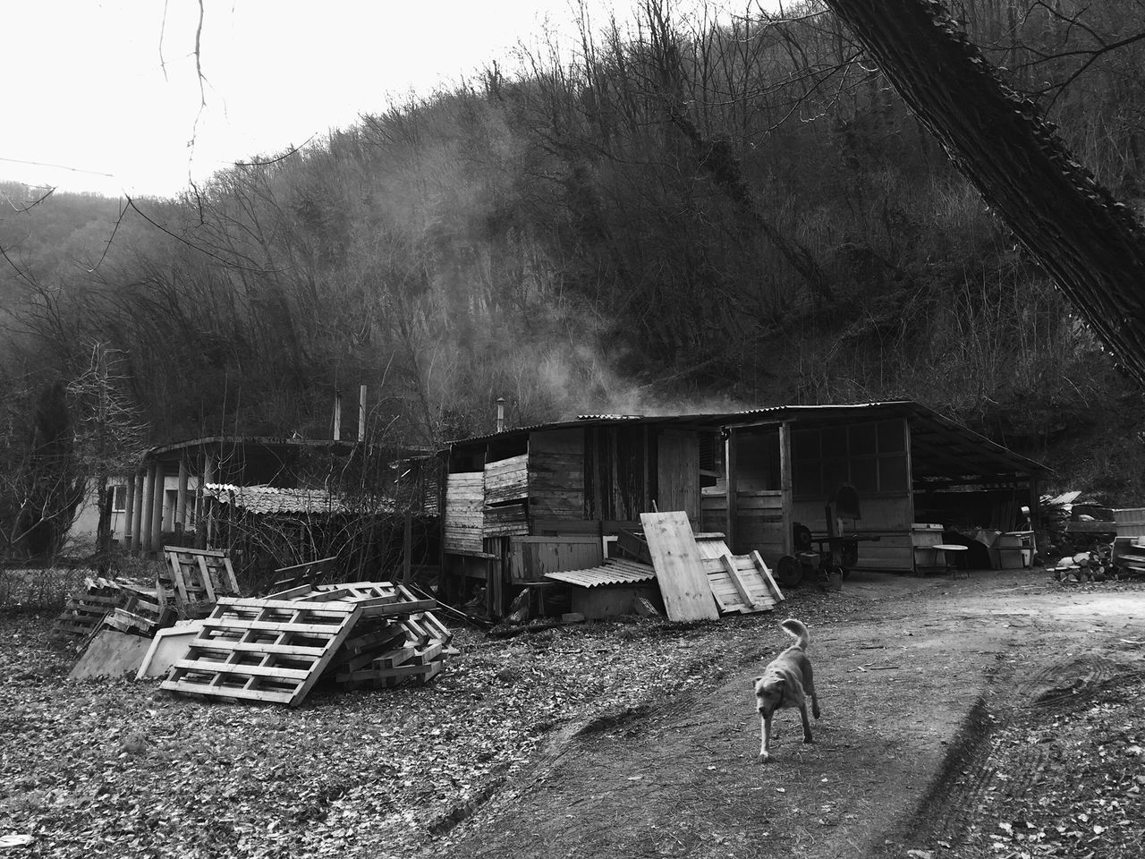 Old sawmill near Veternica cave, Dubravica, Gornji Stenjevec, Zagreb, Croatia, 2017. Veternica Gornji Stenjevec Zagreb Croatia Documentary Sawmill Tree Outdoors Built Structure Wood - Material Wood Forrest Architecture Domestic Animals Dog