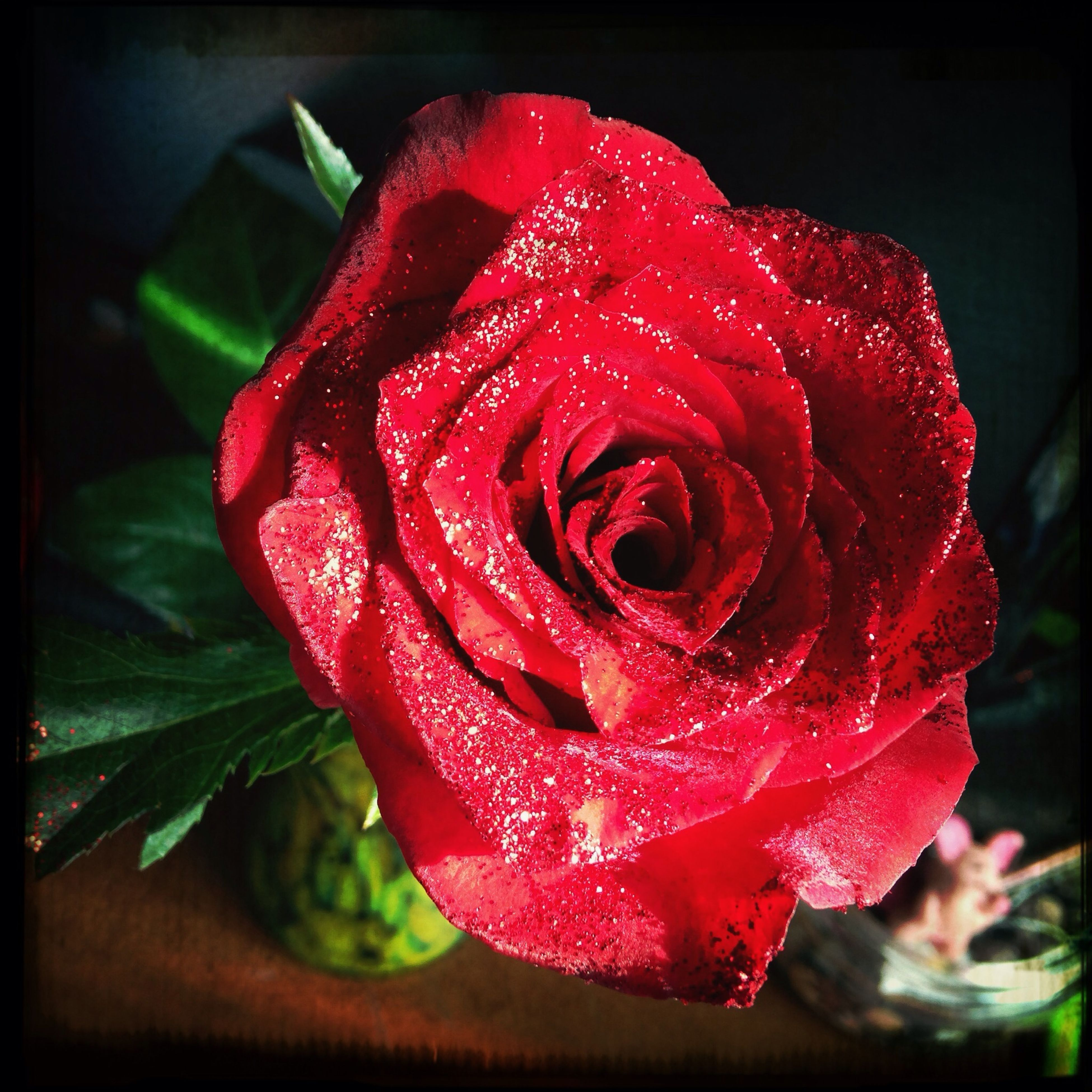 flower, petal, flower head, freshness, rose - flower, fragility, drop, close-up, single flower, beauty in nature, wet, single rose, growth, red, rose, blooming, water, nature, dew, focus on foreground