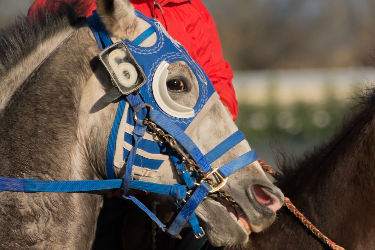 Animal Themes Close-up Competition Competitive Sport Day Domestic Animals Horse Horse Racing Human Body Part Jockey Mammal Motion One Animal Outdoors People Sport Sports Race Sports Venue Stadium