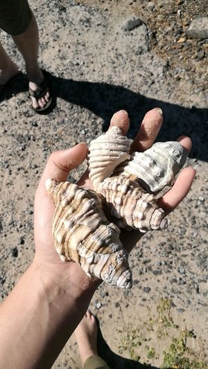 People Beach Nature Day Outdoors Sand Close-up Human Leg Human Body Part Sand Sunlight Shell Shells Hand Rock - Object Rocky