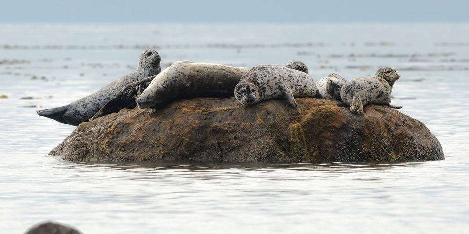 Beautiful stock photos of seal,  Animal Themes,  Animal Wildlife,  Animals In The Wild,  Beauty In Nature