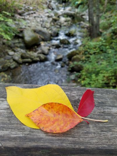 Leaf Autumn Season  Water Focus On Foreground No People Yellow Fall Leaves Steam Wood Wood Rustic Style Rustic Leaf Autumn Change Season  Close-up Dry Yellow Fallen Water Fallen Leaf Leaf Focus On Foreground