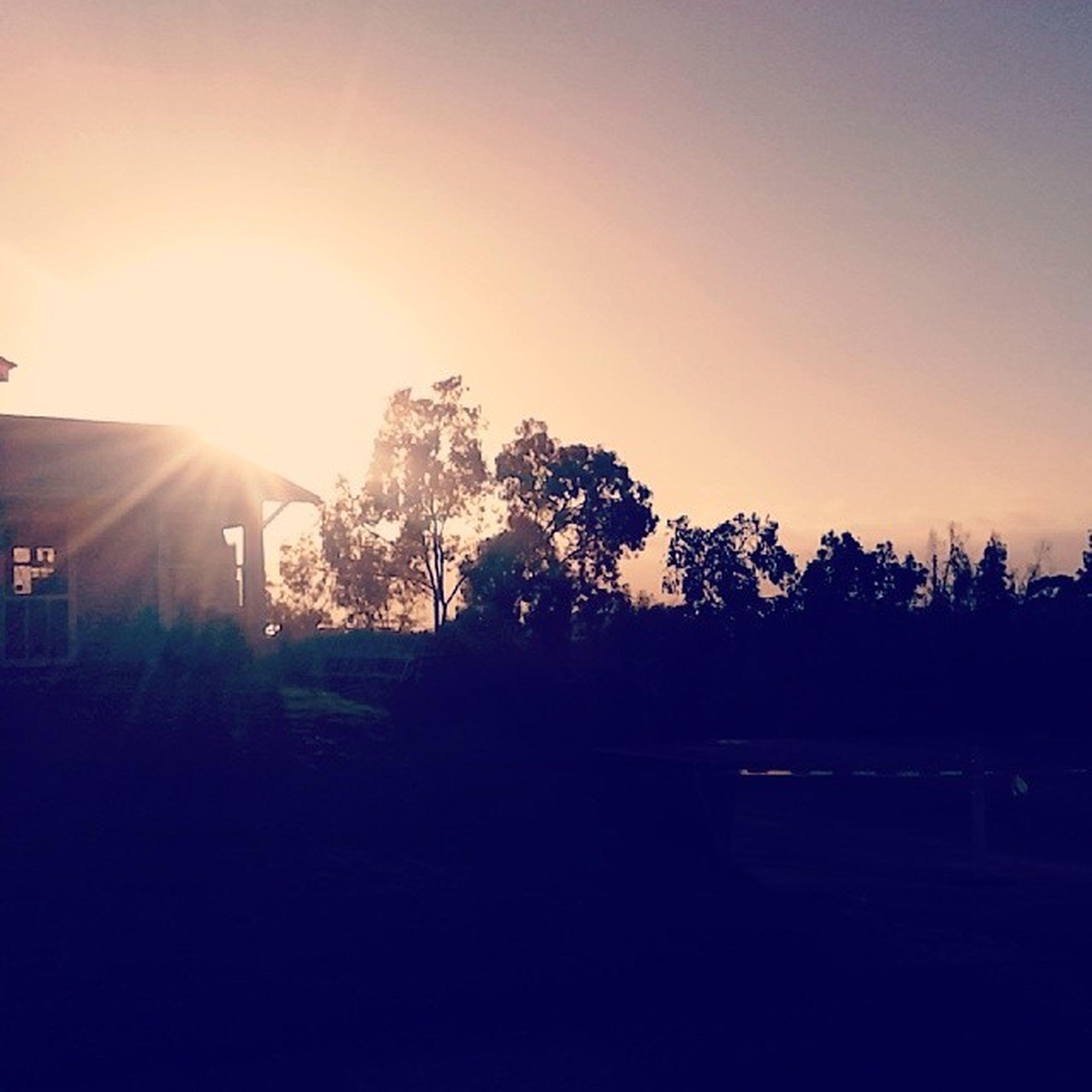 sun, sunset, tree, sunbeam, silhouette, clear sky, sunlight, lens flare, copy space, tranquility, tranquil scene, nature, beauty in nature, sky, bright, scenics, growth, outdoors, no people, landscape