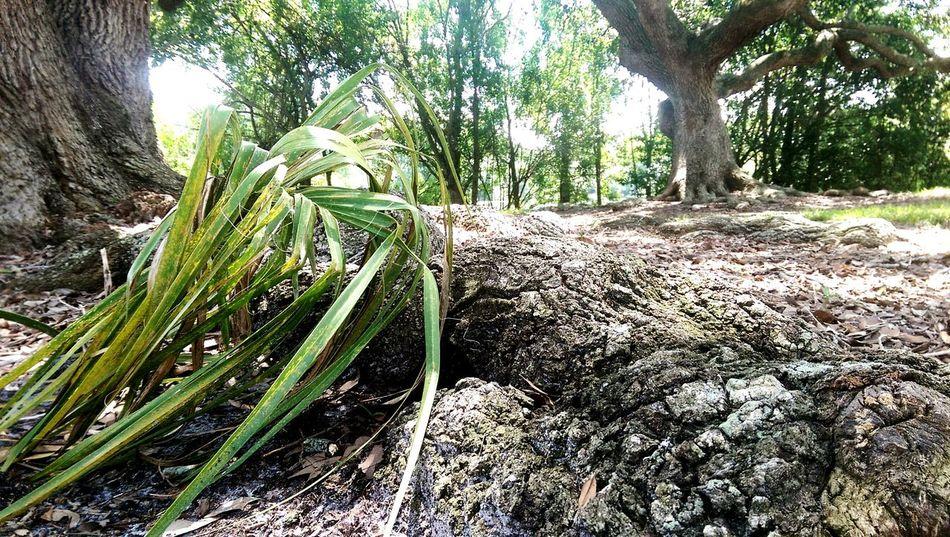 Nature Walking Taking Photos Florida