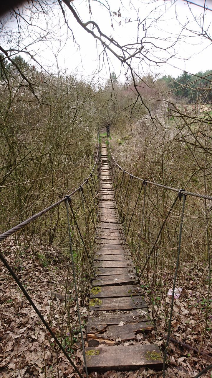 tree, tranquil scene, the way forward, tranquility, bare tree, nature, outdoors, day, no people, beauty in nature, growth, forest, landscape, scenics, footbridge, branch, sky