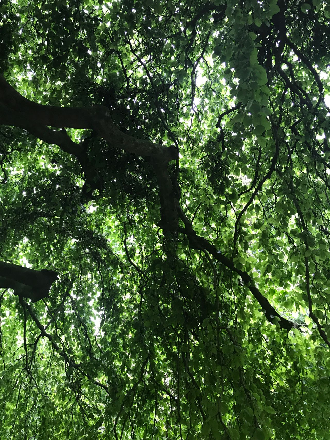 Tree Nature Growth Low Angle View Branch Forest Green Color Outdoors Day Beauty In Nature Tranquility No People Leaf