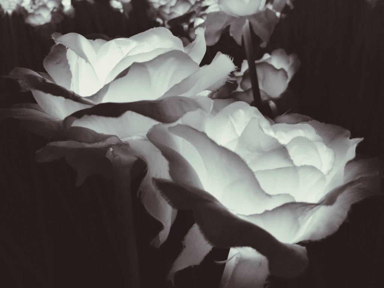 Artificial beauty Flower Head 100000roses