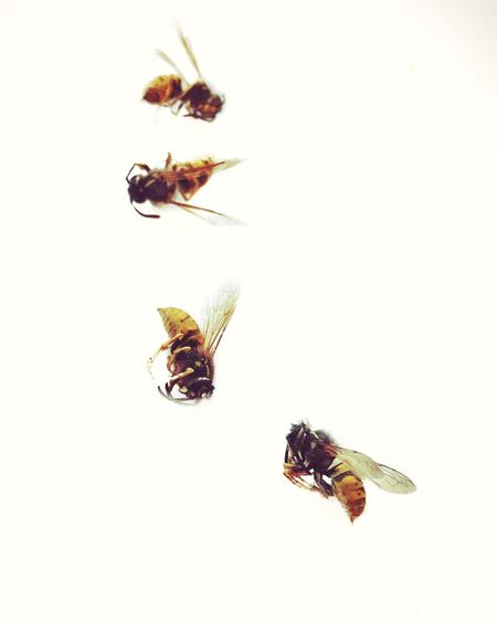 Fragility Nature Insect Wasps Death Autumn Insects Collection Wings Bees Deadwasps CIRCLE Of LIFE Morbid Four Wasps WhitewashWildlife