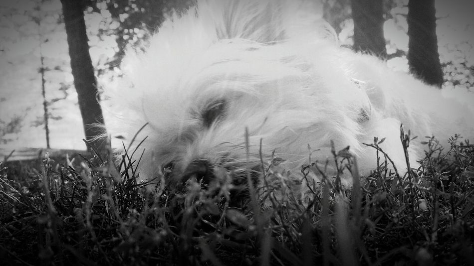 Taking Photos Enjoying Life Picoftheday EyeEm Gallery Frankee Dogs Of EyeEm Good Morning Dog Life