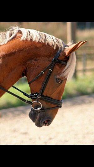 My beautiful Horse ❤️. Kwpn Paard Horses Horse Riding Horseriding Horsepower Love