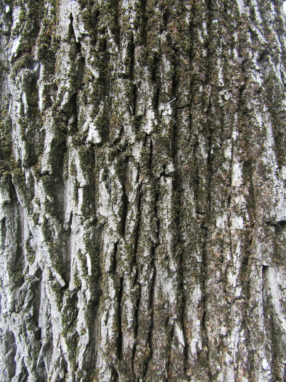 Full Frame Backgrounds Pattern Tree No People Textured  Close-up Rinde Bark Bark Texture Barks Of A Tree Bark Texture Background Trunk Baumstamm