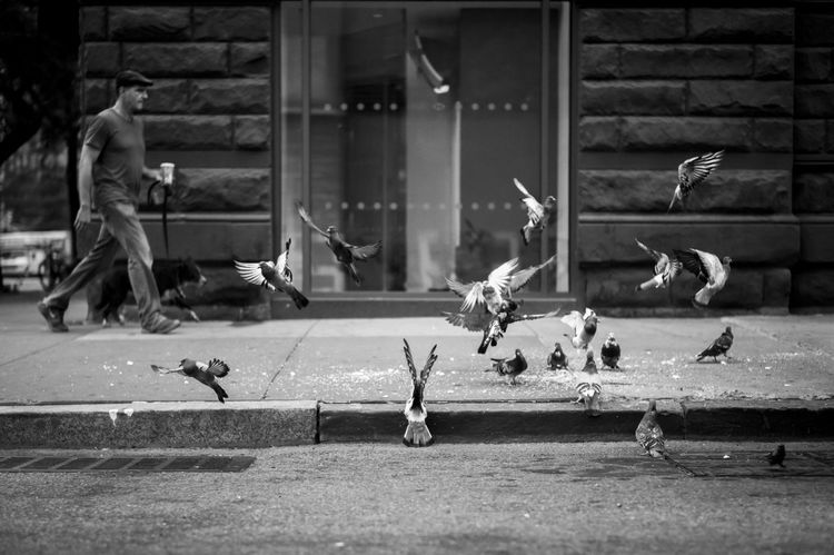 Animal Themes Bird Coffee Dogs Mayhem  Morning Walk New York Pigeon