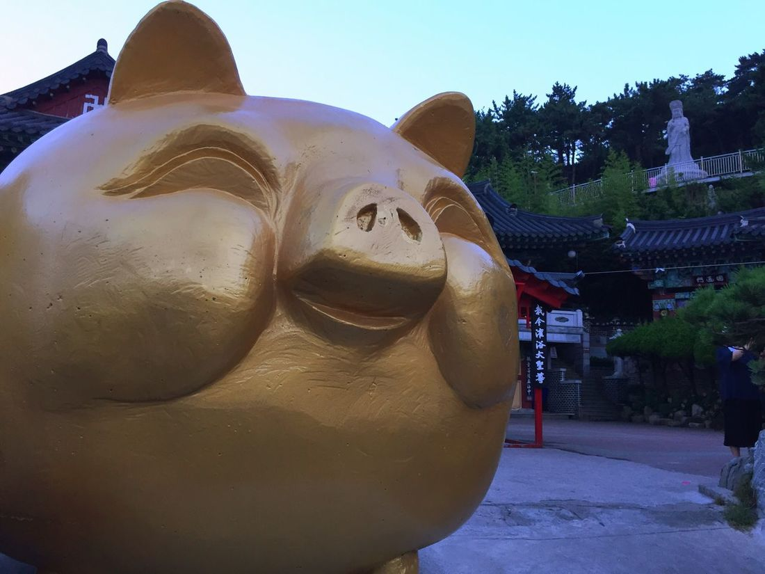 Taking Photos Korean Temple Gold Pig Lucky IPhoneography
