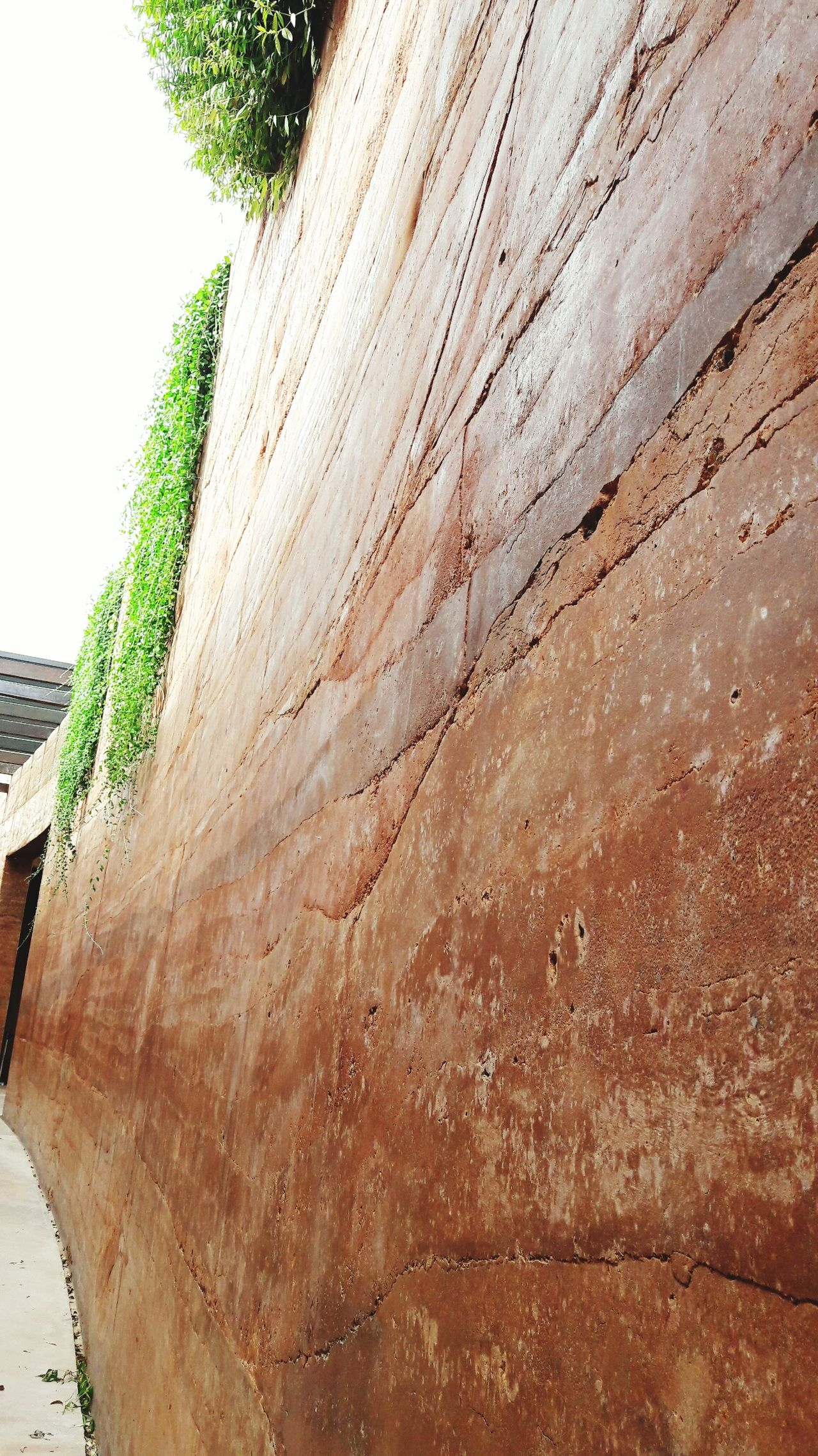 Tree Wall Photooftheday Fortification Love Thailand