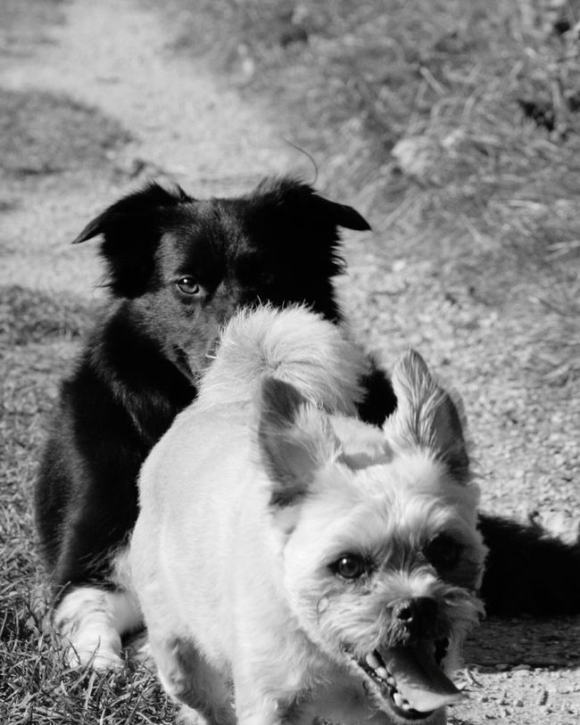 mad faced max Animal Themes Dog Two Animals Pets Animal Behavior Dogs Of EyeEm Dogs Monochrome Photography Crazy Faces