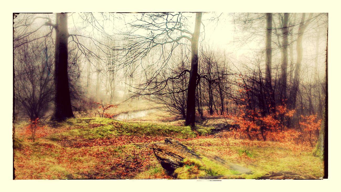 Brisk walk in the woods