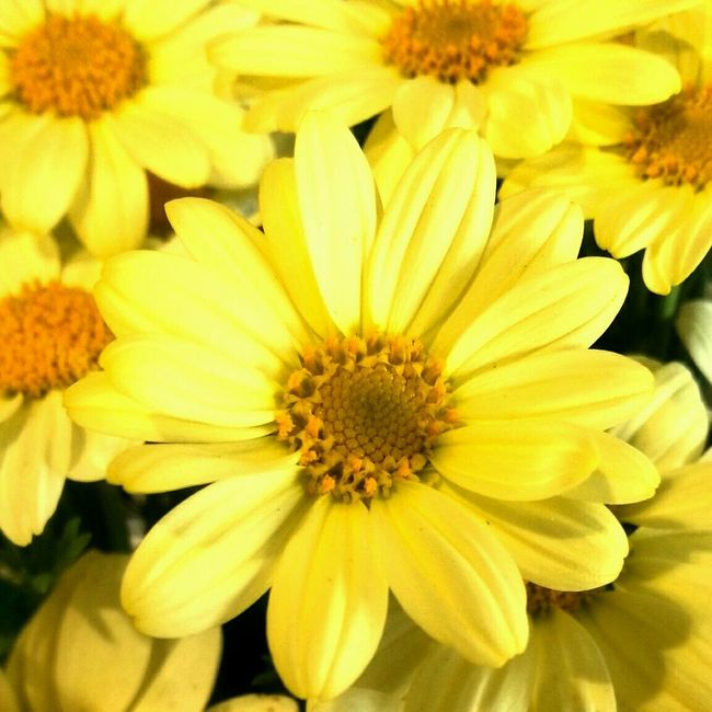 No Filter Pantone Colors By GIZMON Things That Are Yellow Flowers