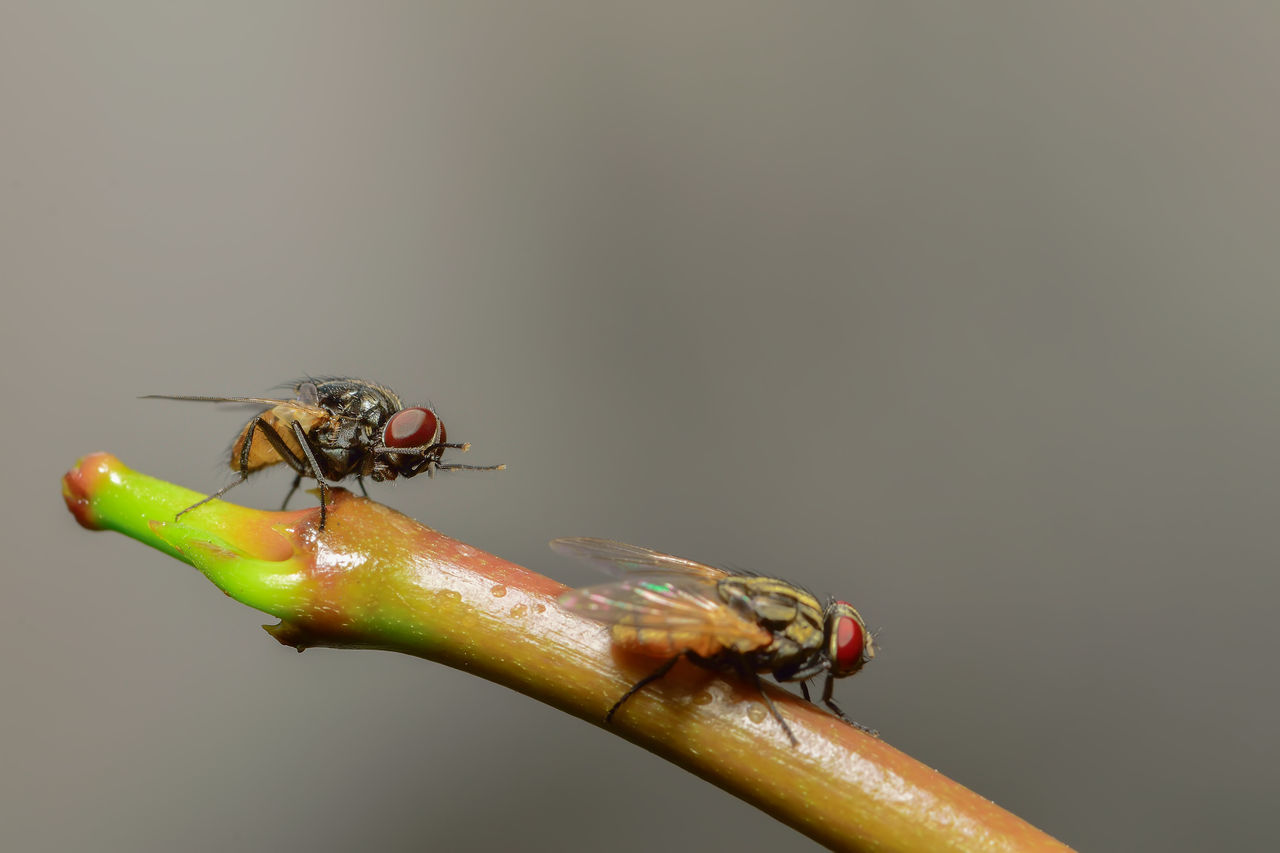 Flies perch on branches Close-up Focus On Foreground Green Color Nature No People Selective Focus
