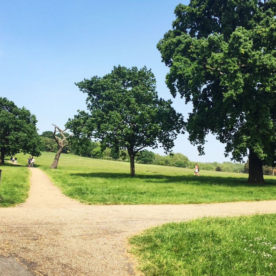 Just because it's rare! Sunny Day Sun In London Nature Nature In The City Sunday Ride Summertime Green Grass Blue Sky Perfect Weather Park