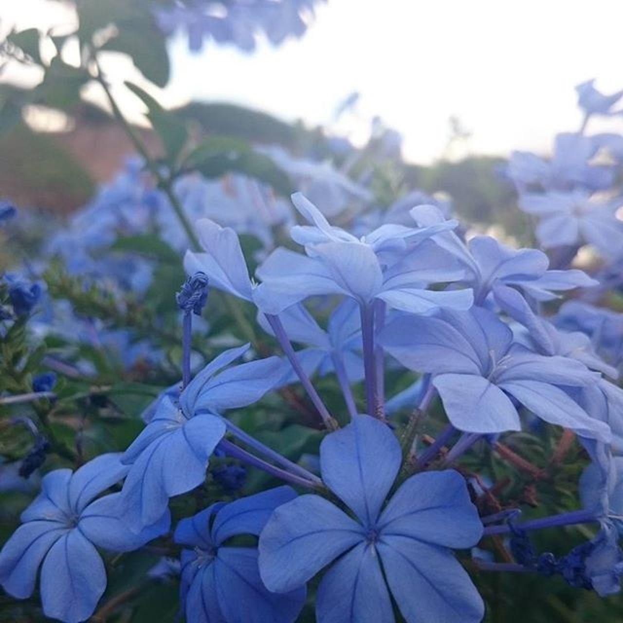 Virag Flower Flowerslovers Kekvirag Naturephotography Nature Naturelovers Naturephotograph Naturephoto Roma Roma Rome Italy Világlegszebbvárosa Visszakellmenni Macro Beauty