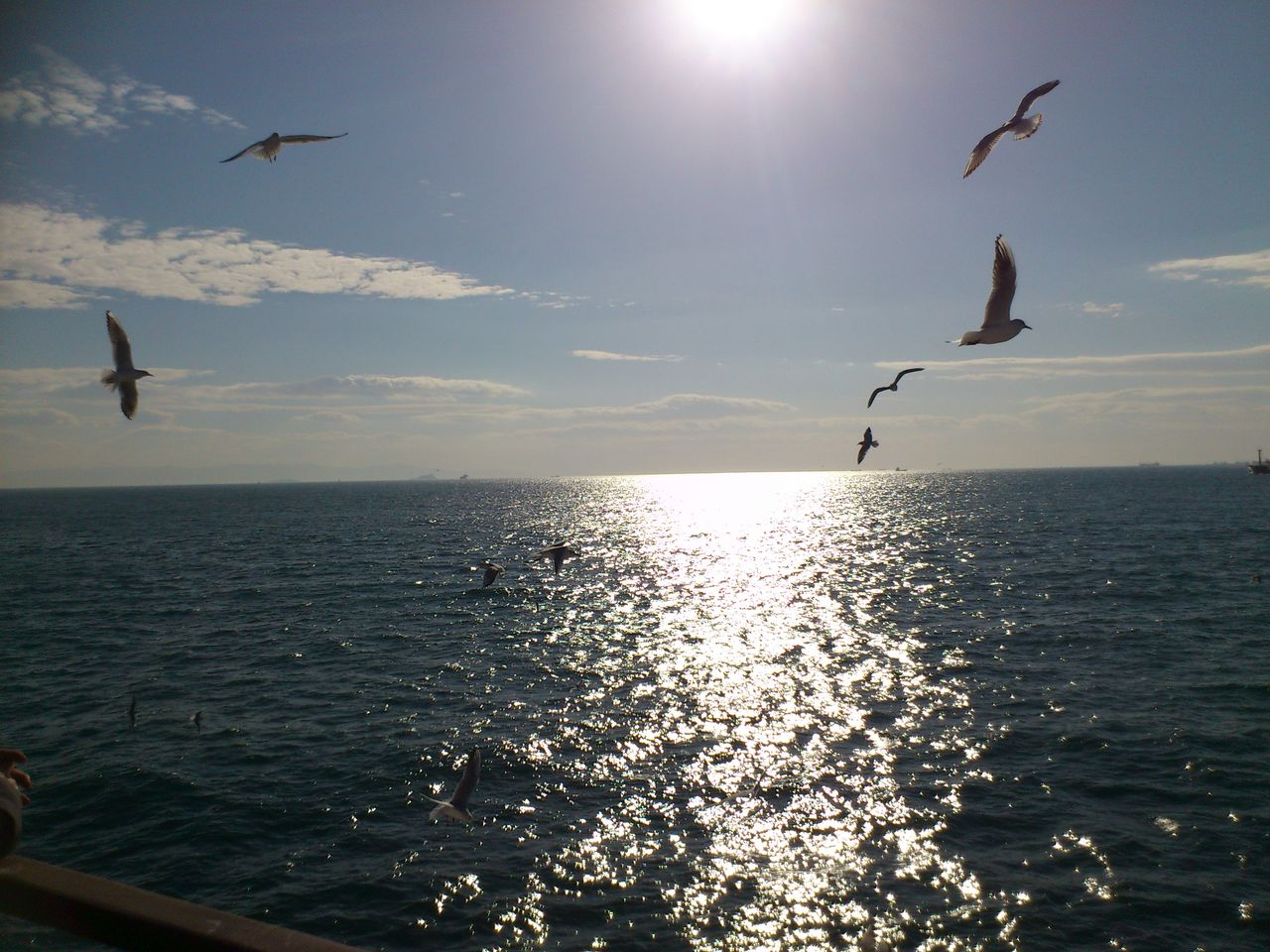 sea, flying, mid-air, bird, horizon over water, water, nature, sun, sky, sunlight, spread wings, scenics, animal themes, beauty in nature, tranquil scene, sunset, animals in the wild, outdoors, one animal, silhouette, tranquility, no people, animal wildlife, day