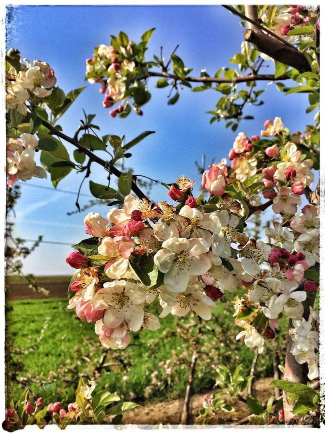 Blossom time Enjoying Life Relaxing