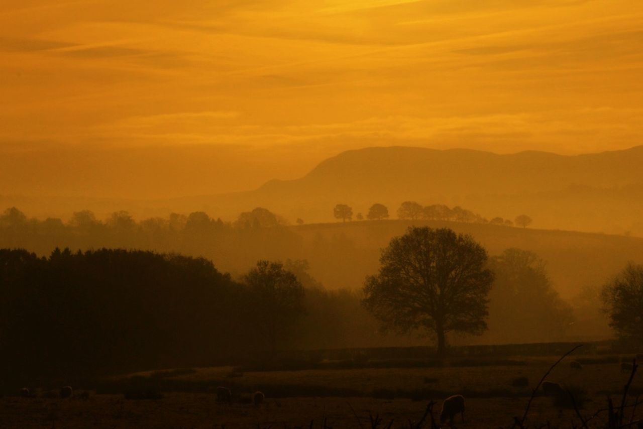 tree, sunset, landscape, beauty in nature, nature, scenics, tranquil scene, tranquility, field, fog, no people, silhouette, idyllic, outdoors, sky, hazy, mist, mountain, agriculture, growth, rural scene, day