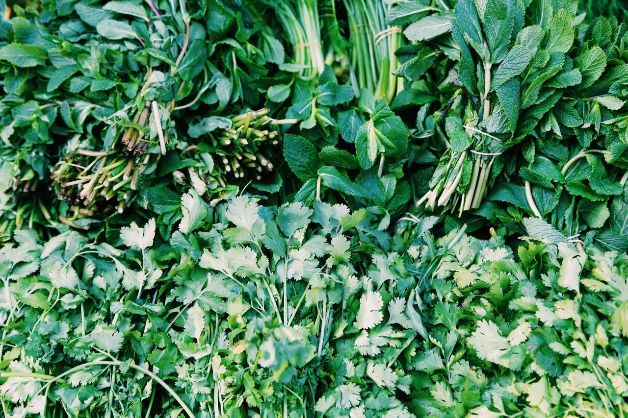 green color, food and drink, vegetable, healthy eating, food, leaf, growth, freshness, abundance, plant, raw food, day, outdoors, no people, full frame, nature, agriculture, close-up