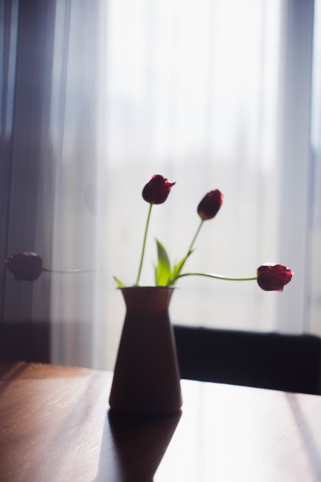 Beauty In Nature Blooming Bouquet Close-up Curtain Day Flower Flower Arrangement Flower Head Flowers Fragility Freshness Growth Home Interior Indoors  Nature No People Petal Plant Tulip Vase Window