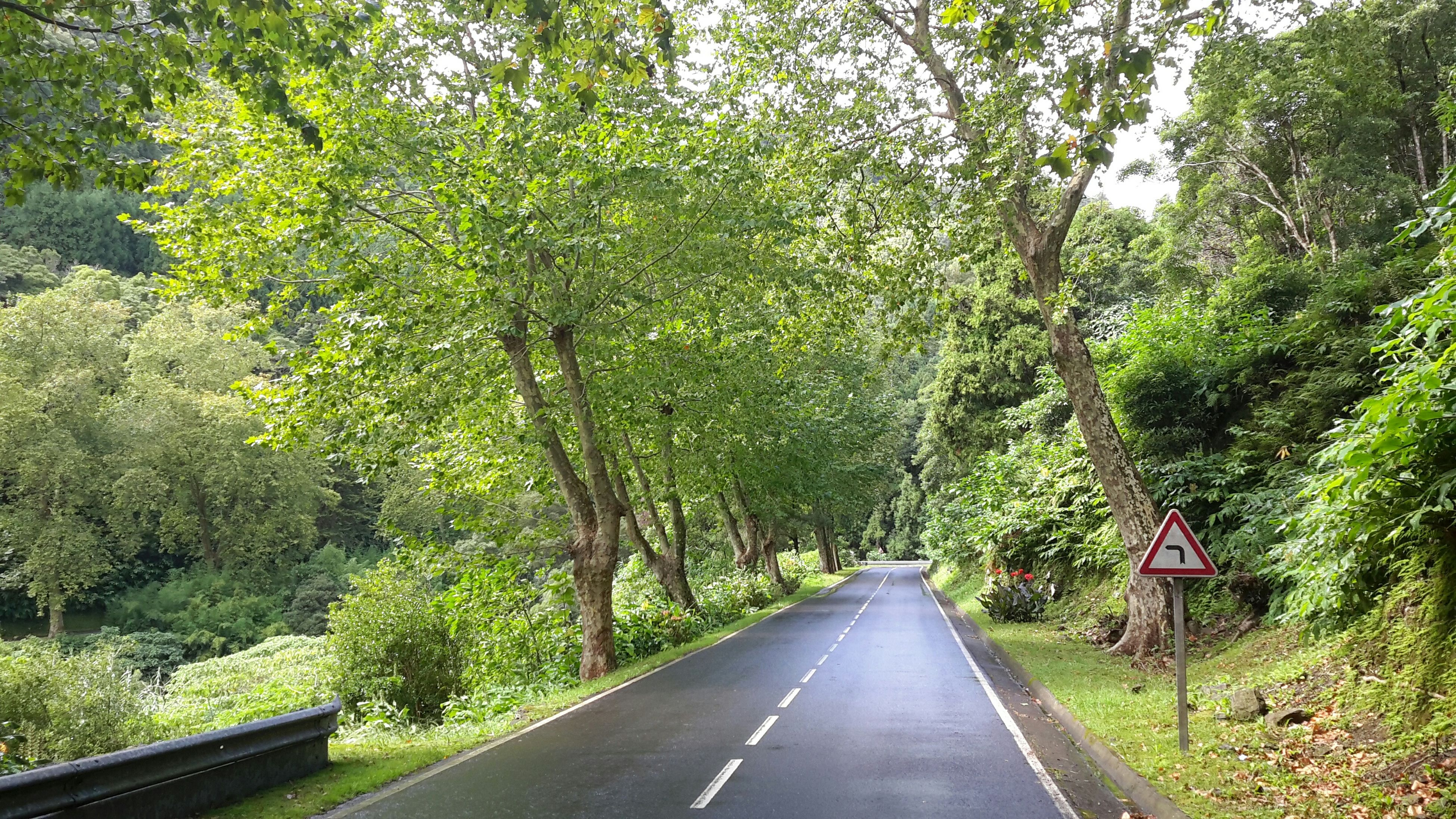 tree, the way forward, transportation, diminishing perspective, road, growth, vanishing point, green color, nature, tranquility, forest, branch, empty road, long, lush foliage, tranquil scene, beauty in nature, day, country road, no people