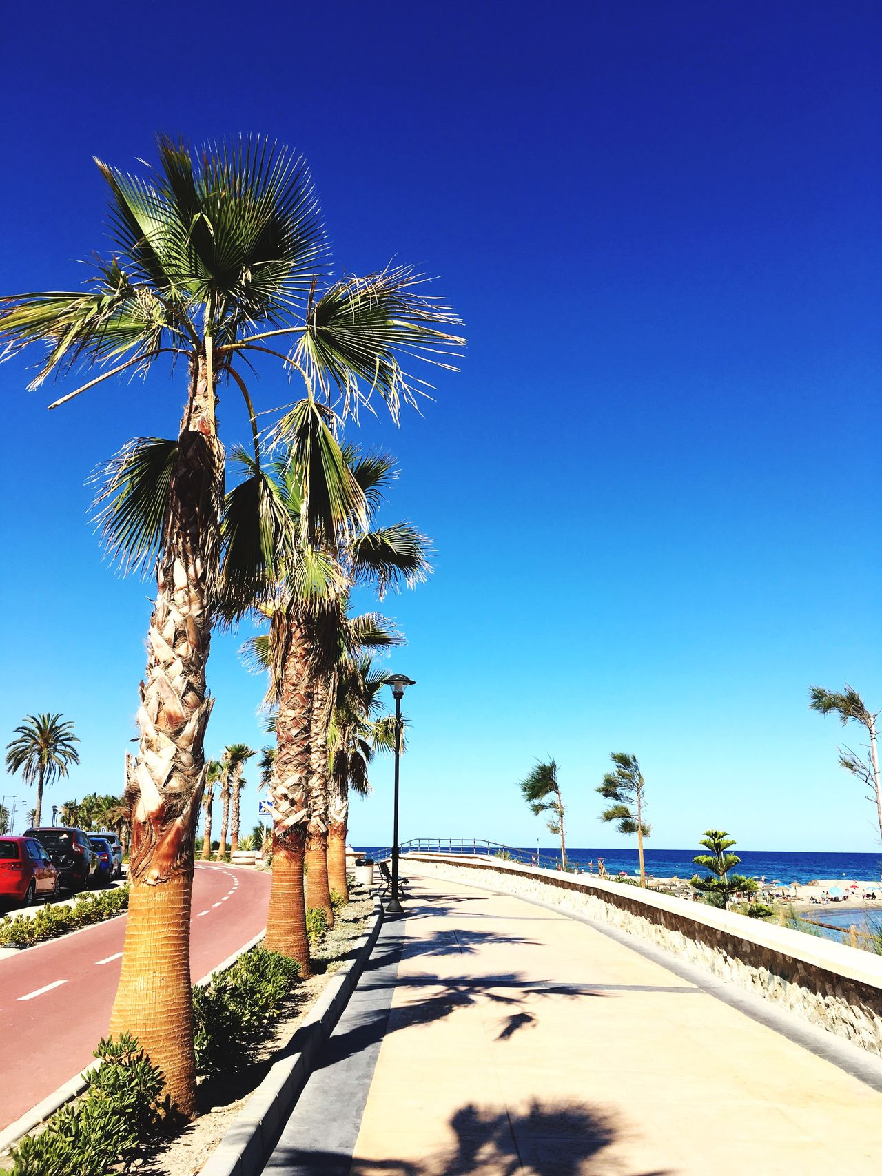 Beach Palm Tree Sunlight Tree Day Blue Clear Sky Outdoors Nature Shadow Growth Scenics Beauty In Nature Sky Sea Vacations No People Water Majácar First Eyeem Photo Let's Go. Together.