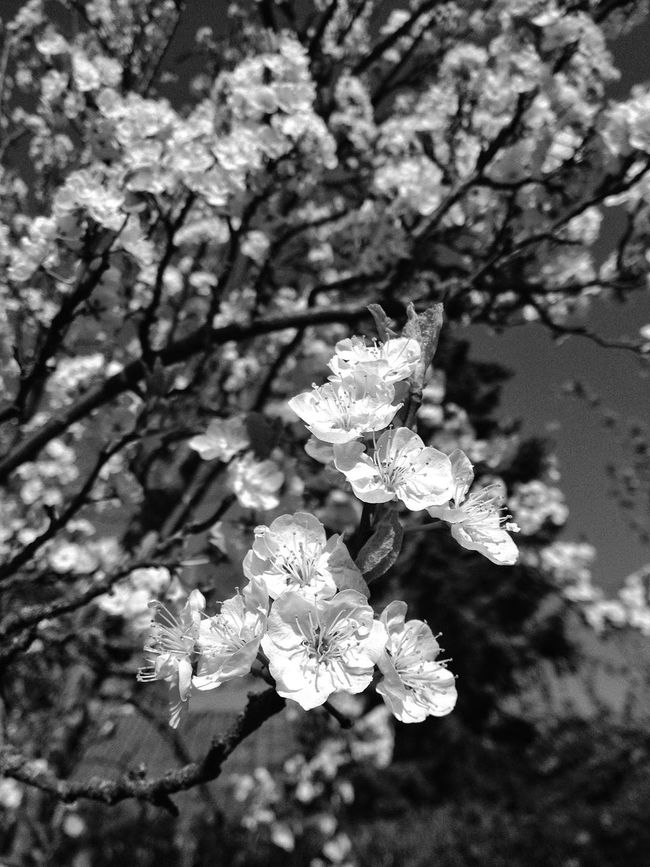 Summertime! Eye4photography  Nature_collection Bw_collection EyeEmBestEdits