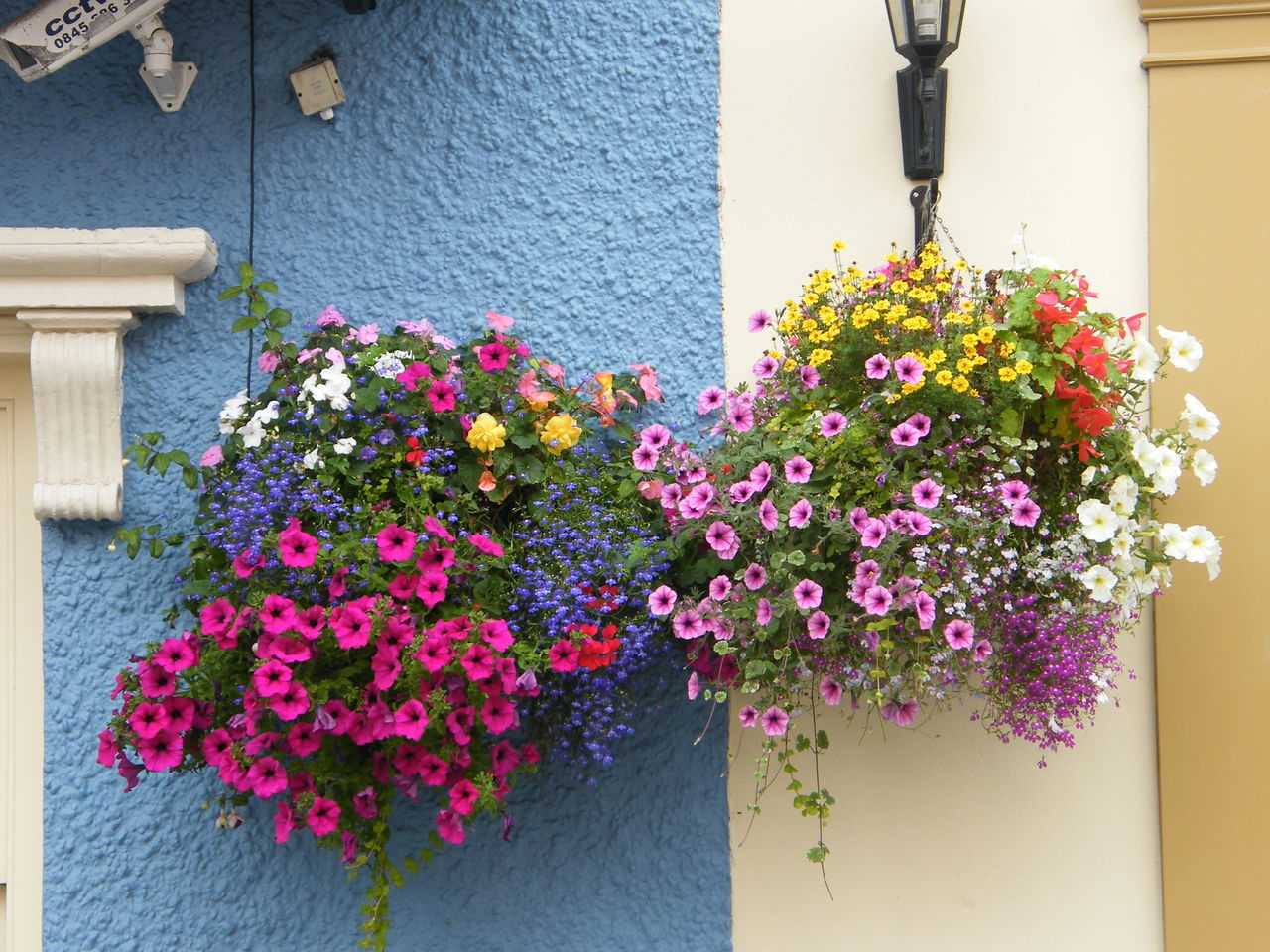 Architecture Beauty In Nature Blooming Building Exterior Built Structure Close-up Day Flower Flower Head Fragility Freshness Growth Nature No People Outdoors Pembrokeshire Pembrokeshire Coast Pembrokeshire Coastal Path Petunia Pink Color Plant Seaside Town Tenby