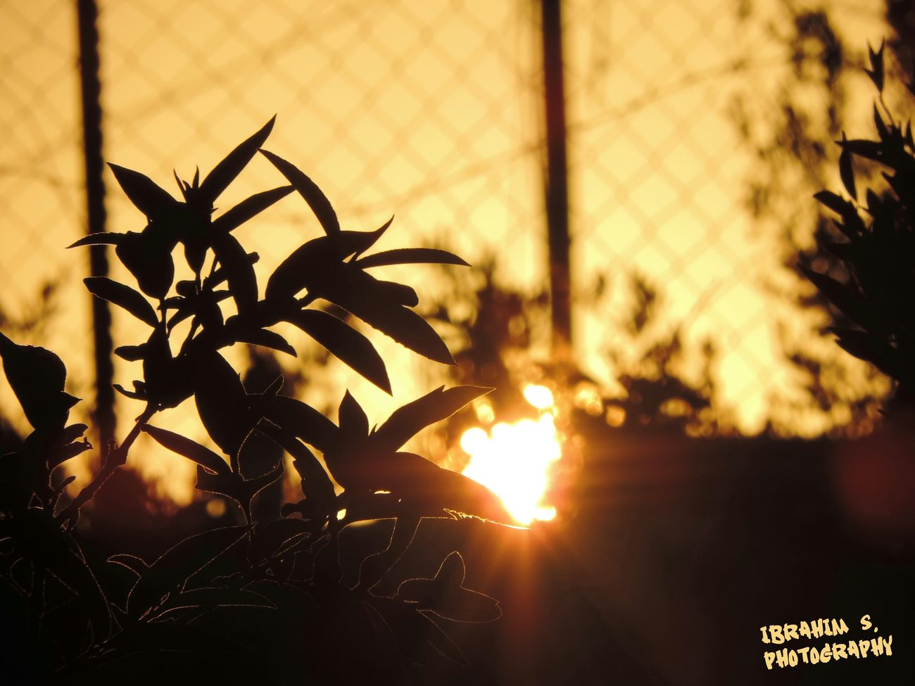 Depth Of Field Sunset Hello World Ibrahim S Photography
