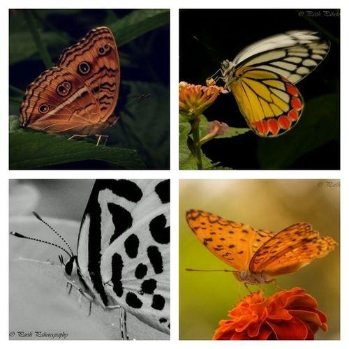 Parth Thakkar Photograph Butterflystroke Instagramsurat Instasurat Surat_igers Surtiphotographer Iamphotographer05 _______________________ Instamoment Instagood Instadaily Instalike Instafollow Instapic Instatags Instaphoto Instabest