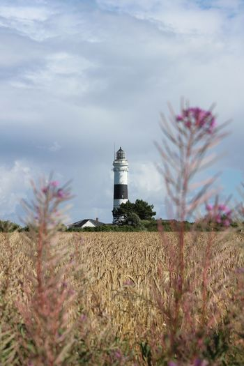 Lighthouse Leuchtturm Kampen Sylt No Filter Kornfeld Cornfield Seascape Tranquil Scene Northsea Nordfriesland Calm Seaside Peace Tranquility Scenery Nature Sunny Day Countryside Clouds And Sky Sylt, Germany Field